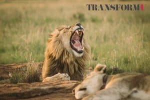 Personal Development Blog - Break The Habit of Negativity