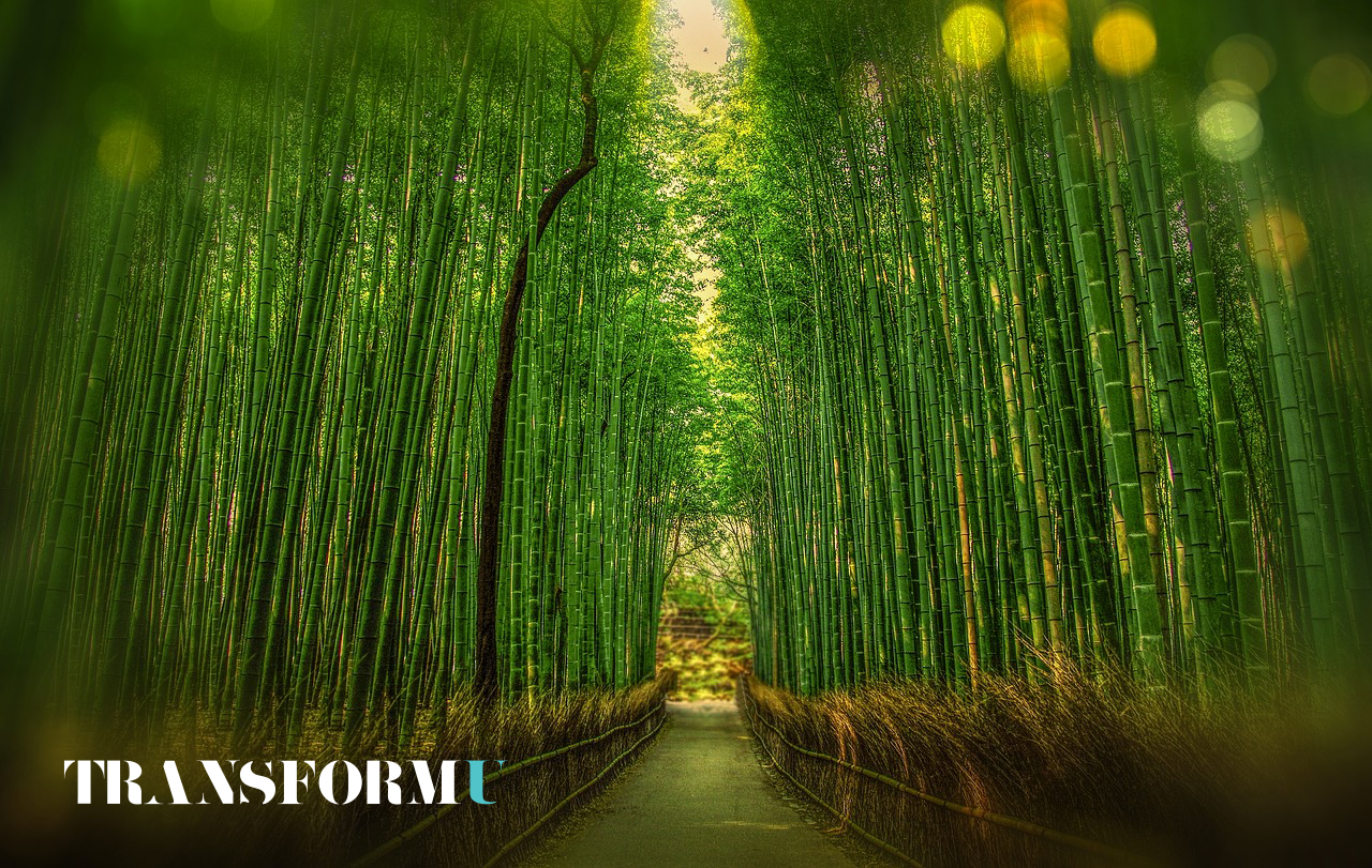 Lessons Learned From the Powerful Bamboo To Build a Resilient Mindset